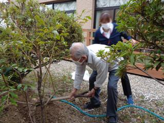 ブルーベリーの木植えたよ