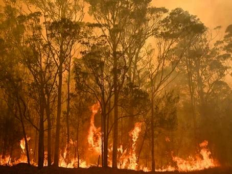 Australia; tragedia ecológica
