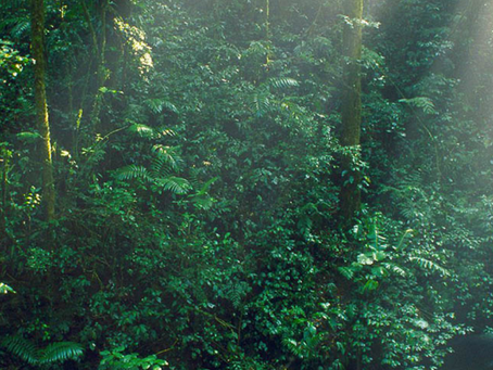 Costa Rica tiene el doble de bosques que hace 30 años, ¿cómo lo hicieron?