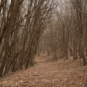 Janapar Trail Repairs Spring 2018