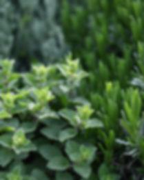 Травяные растения