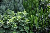 Plantes_d'herbes_séance_naturopathie_corinne_cresson_massangel777.com_medecine_de_prévention_praticienne_certifiée_ardèche_07_Saint-Sernin