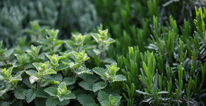 Does your plant need a vaccination?