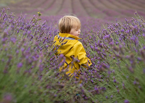 hitchin lavender-4.jpg