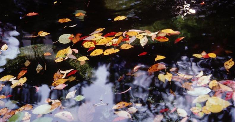 四季折々の情緒が楽しめる日本庭園