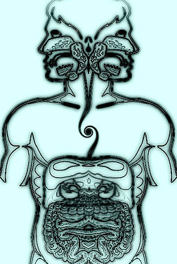 Diagram of man with symmetrical GI tract