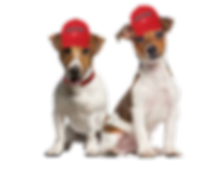 2 dogs.png