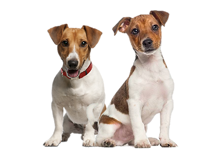 2 dogs without hats.png