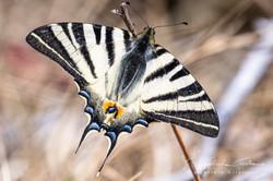 farfalla gabriele cristiani