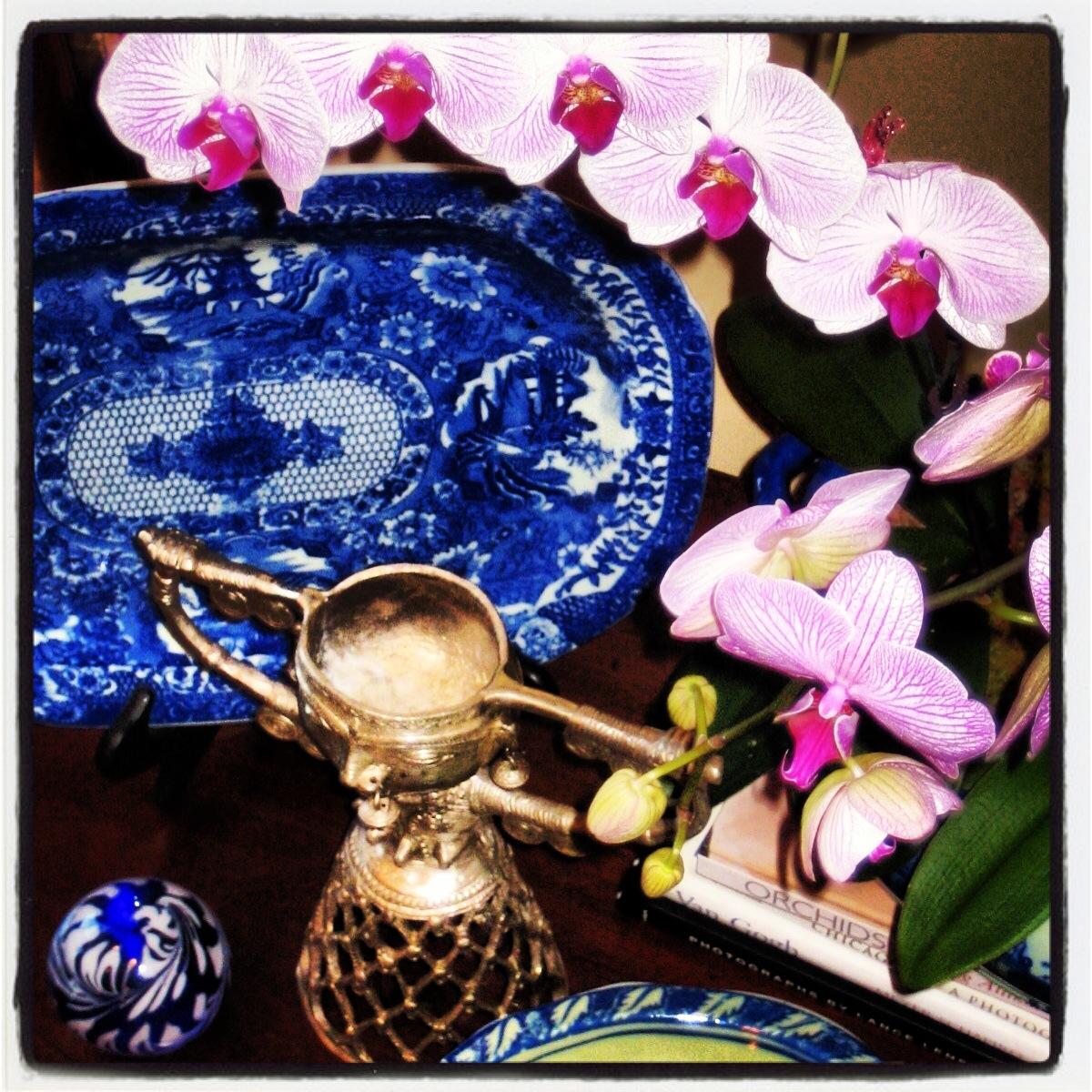 orchid vigil