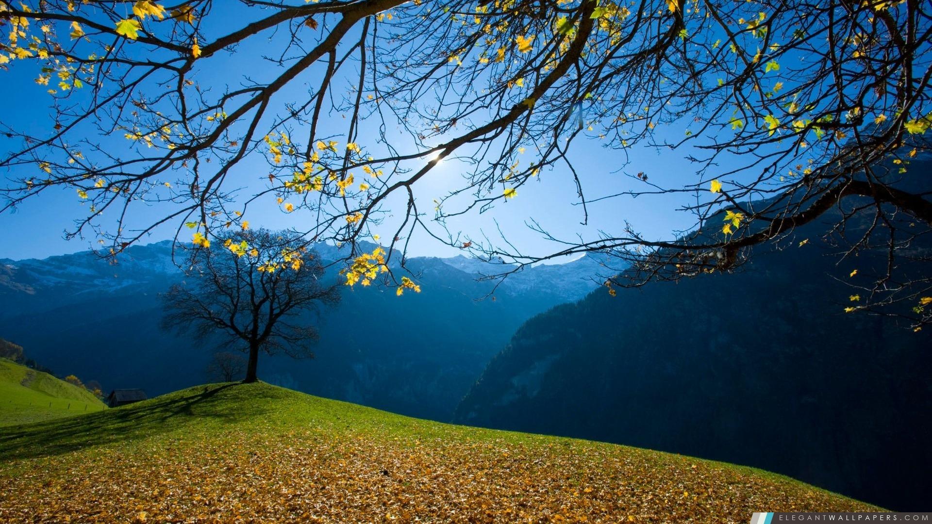 automne-schachental-suisse_1920x1080