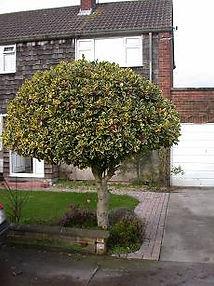 fruittreepruning.jpg