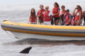 Fin Whale 270814- terceira whale watch 0