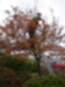 smalltreepruning.jpg