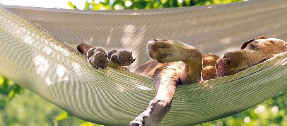 Relaxing%20dog_edited.jpg