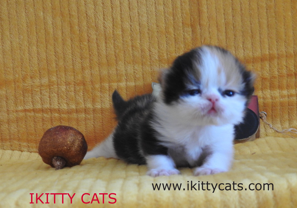 ikitty cats pic 5 GOD Bless You.jpg