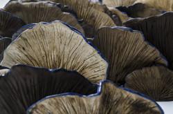 Hongos azules/Blue Mushroom