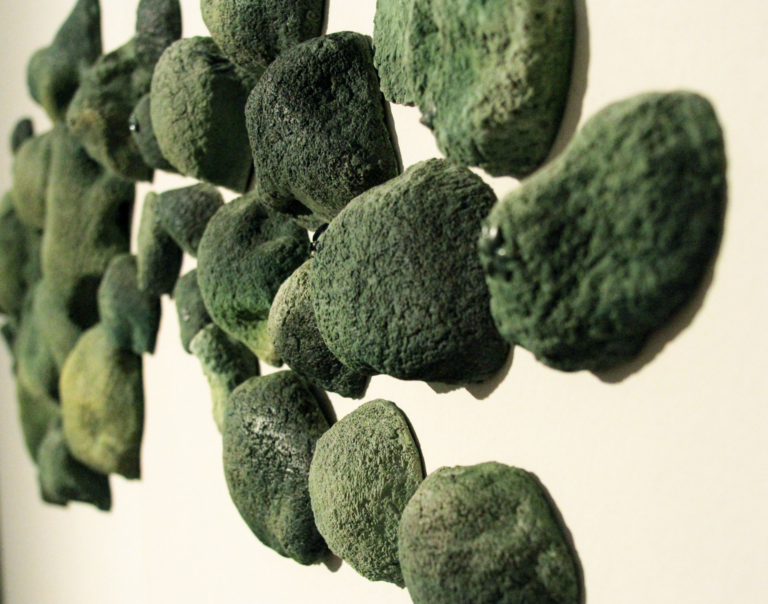 Musgos/ Mosses