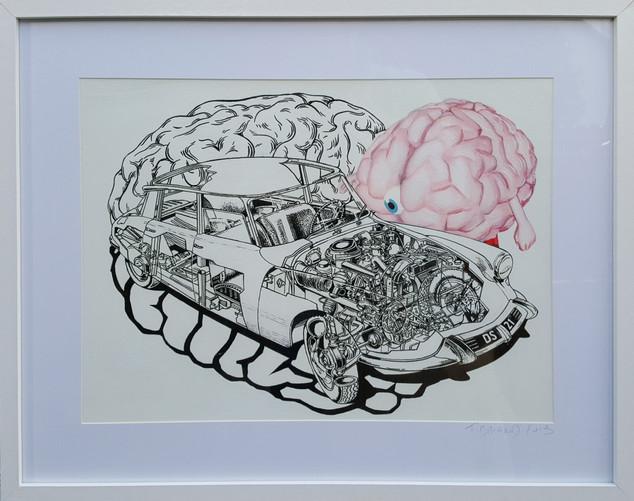 """""""Cerebellum motor"""""""