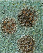 Cellules
