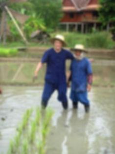 Malcolm Teasdale rice farming in Chiang Mai, Thailand