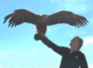 Malcolm Teasdale with Victor the Vulture in Mongolia