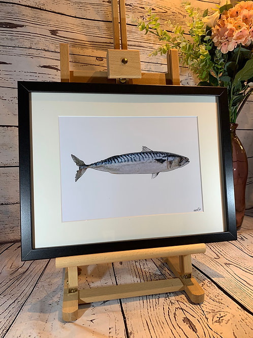 Mackerel Limited Edition Print