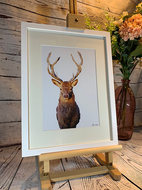 Pocket Stag Limited Edition Print