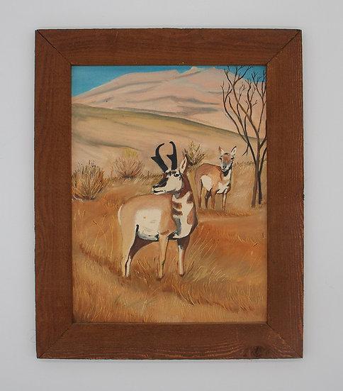 Pronghorn Deer in Field