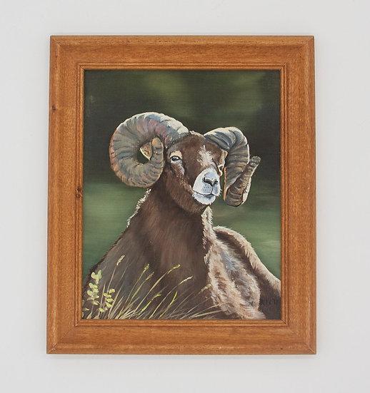 Ram in Field
