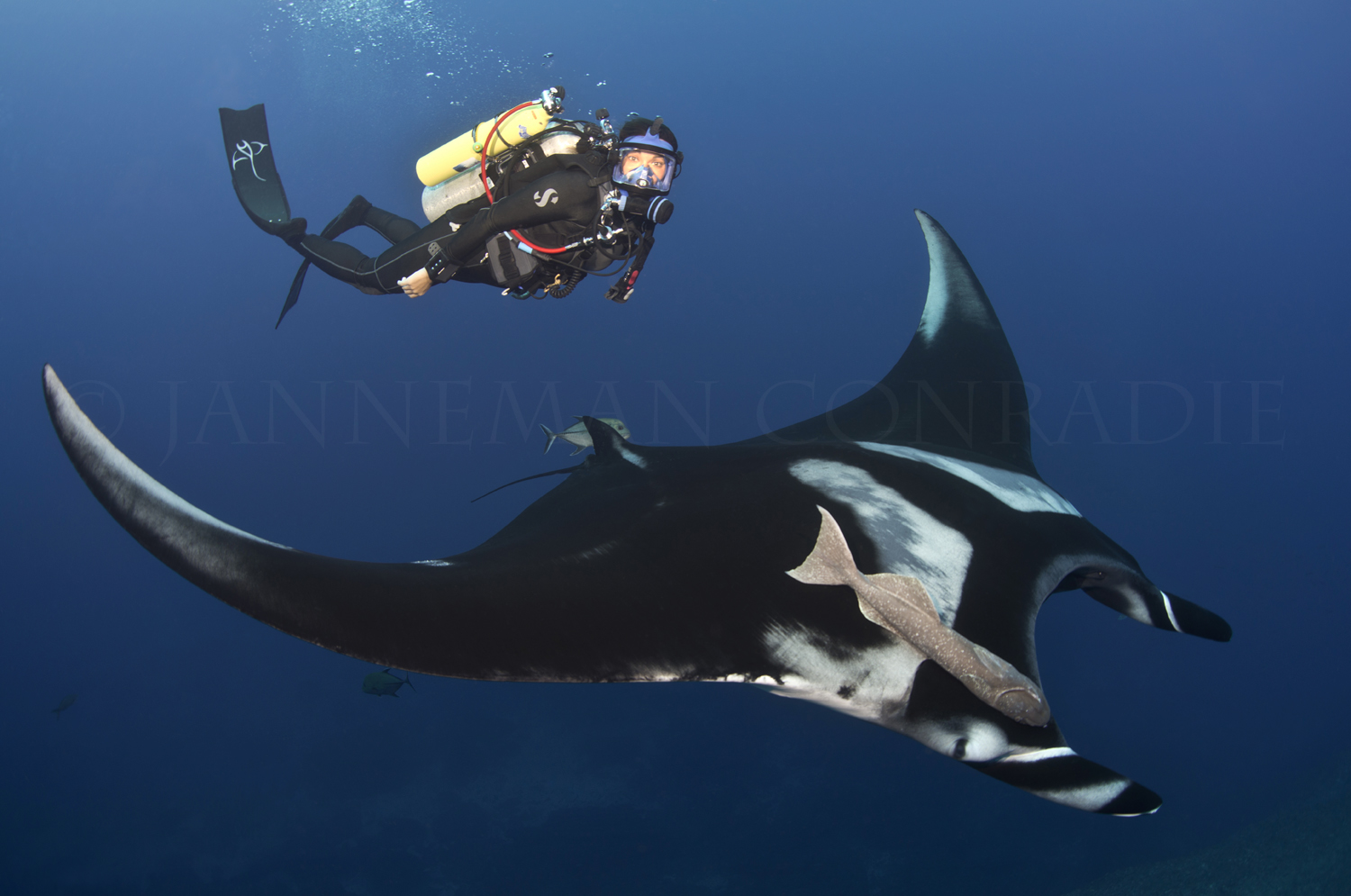 Andrea-full-face-mask-with-giant-manta