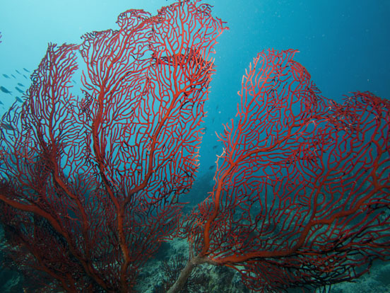 Sea-Fan.split_e
