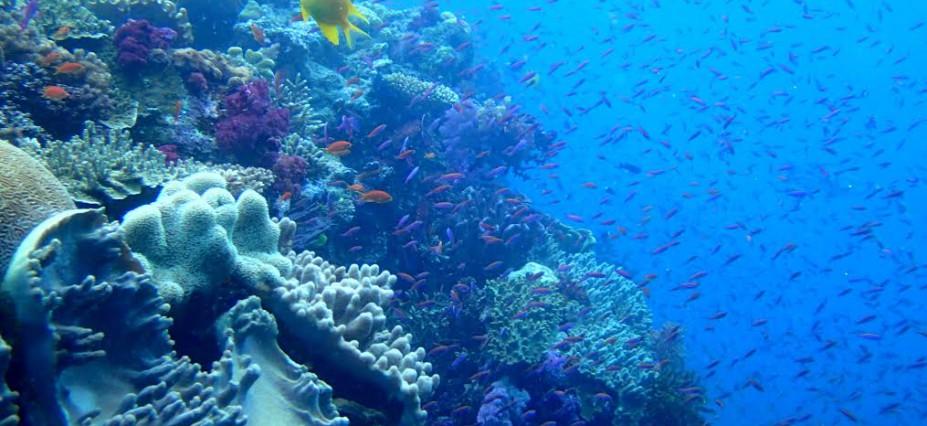 Namena-Fish-927x426