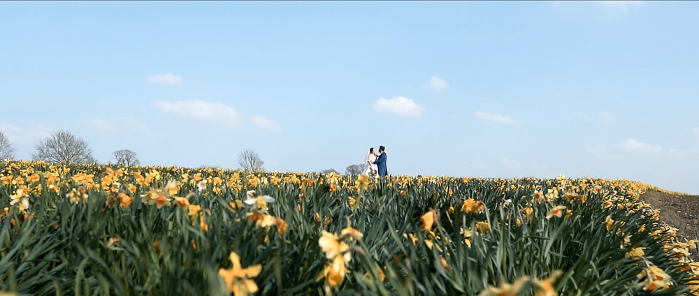 Daffodil Fields | Wedding VIdeography | Ground Films