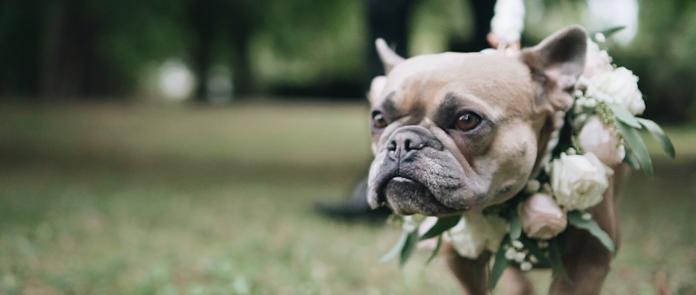 dog wedding | Notley abbey