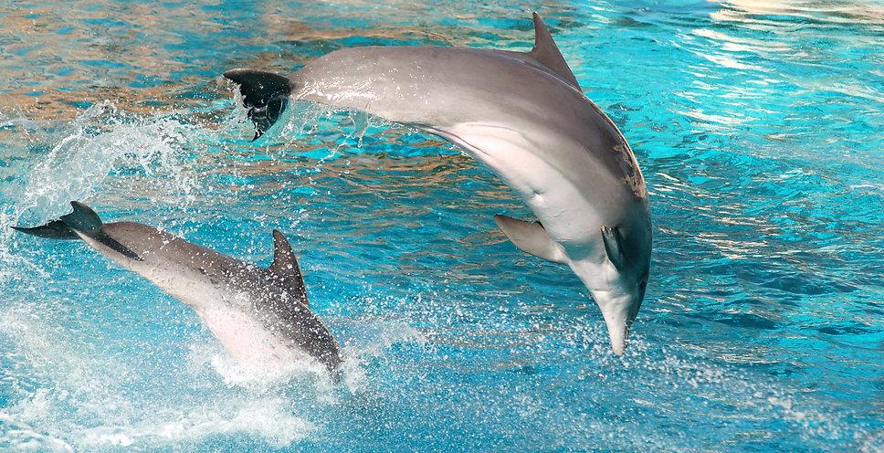 dolphin-jumping.jpg
