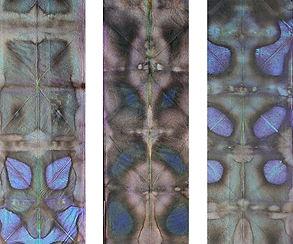 Paper shib blue06.jpg