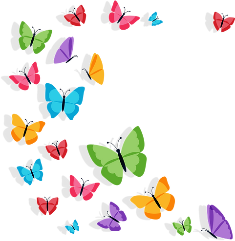 colorbutterfly_edited.png