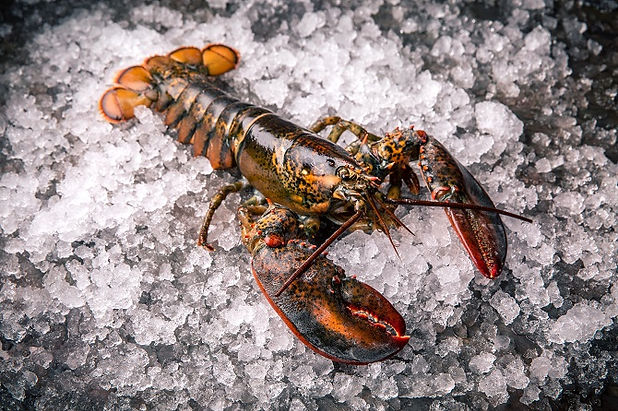 how-to-choose-a-live-lobster-chowhound.j