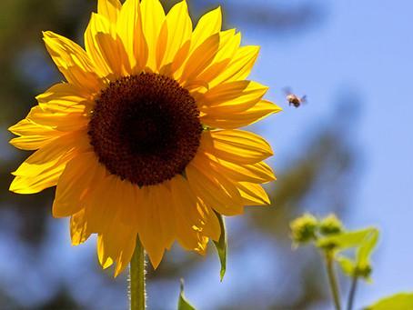 Conheça 5 plantas para cultivar no verão