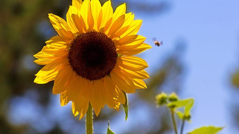 plantas para cultivar no verão