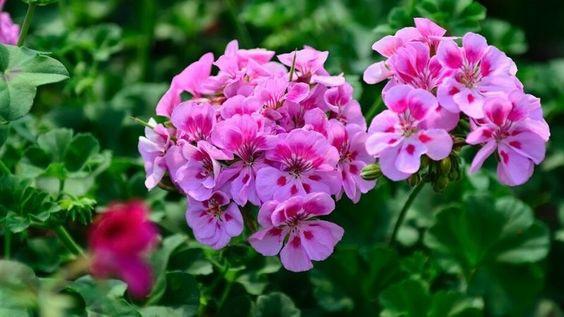 plantas para cultivar no verão 2