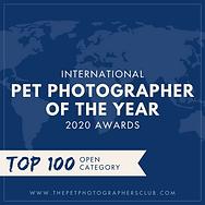 Award Winning Maine Pet Photographer