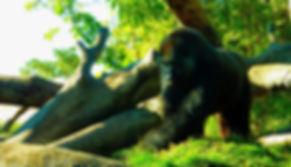 photographe no filter francais parisien parisian french photographer travel traveler photography photographie french voyage voyageur angle home tour brice retailleau quintessence de voisinage bright website backpackv life backpacking backpacker beauty best composition perspective pure light colorful colourful couleurs scenic view point of de vue viewpoint trip tour du monde around the world earth wonderful beautiful gorgeous amazing journey destination tourisme tourism backpacking , été summer outdoor outdoors animals animaux animal fauna wildlife nature portrait close up singe monkey gorille gorilla san diego zoo california californie usa