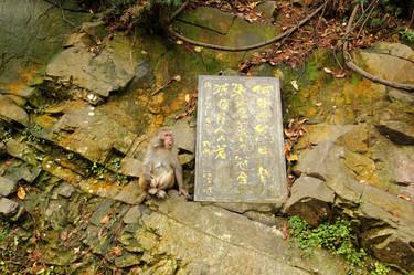 Parc national de Zhangjiajie, Hunan, Chine