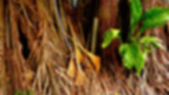 photographe no filter francais parisien parisian photographer travel traveler photography photographie french voyage voyageur angle home tour brice retailleau quintessence de voisinage bright website backpack life backpacker beauty best composition perspective pure light colorful colourful couleurs scenic view point of de vue viewpoint trip tour du monde around the world earth wonderful beautiful gorgeous amazing journey destination tourisme tourism backpacking , summer été outdoor outdoors outside exterieur exterior cityscape city urban urbain ville rue street  landscape paysage paysaje scenery tree trees flora flore arbre arbres vegetation flore roots racines brooms balais broom balai central america amerique centrale latina nicaragua granada