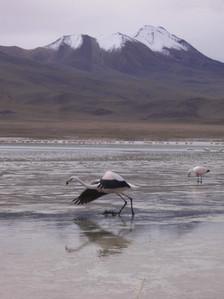 Sur Lípez, Bolivia