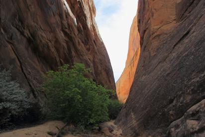Surprise Canyon, Utah, USA