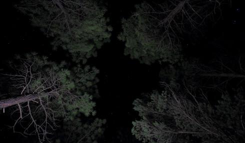 South Kaibab National Forest, Arizona, USA