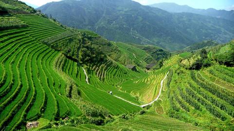 Rizières en terrasse du dos du dragon, Guangxi, Chine